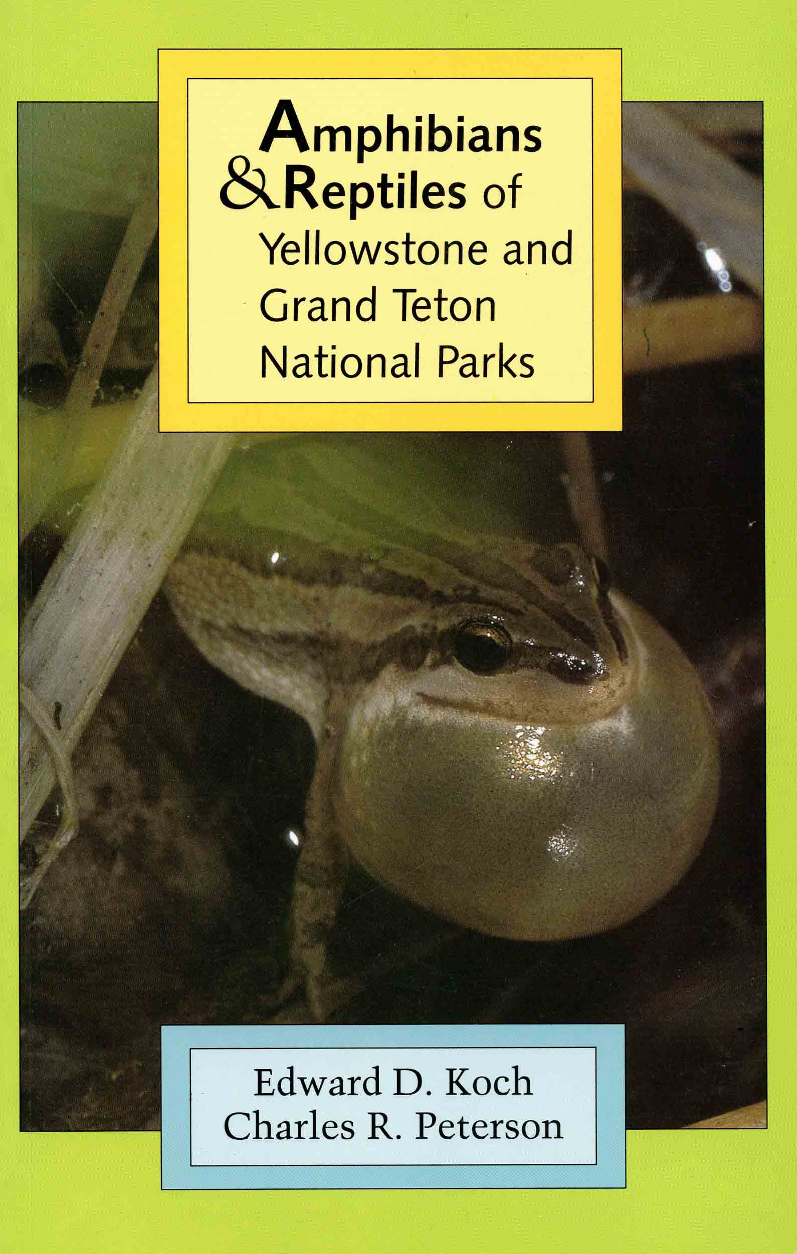 Image for Amphibians & Reptiles of Yellowstone and Grand Teton National Parks