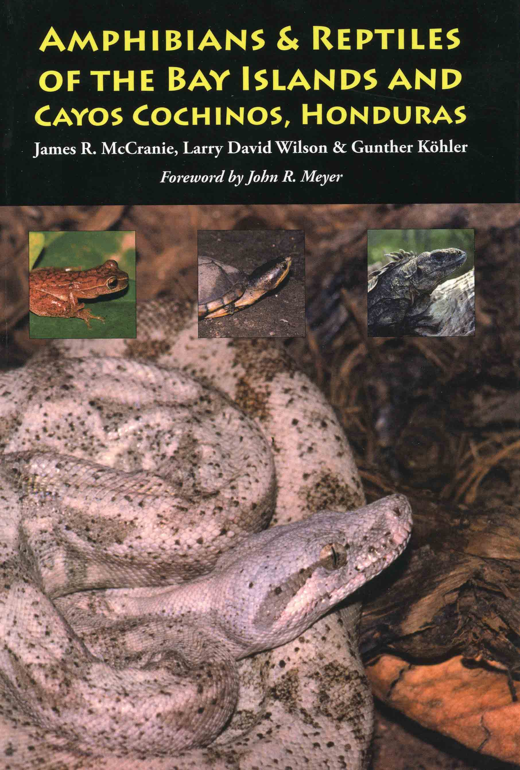 Image for Amphibians & Reptiles of the Bay Islands and Cayos Cochinos
