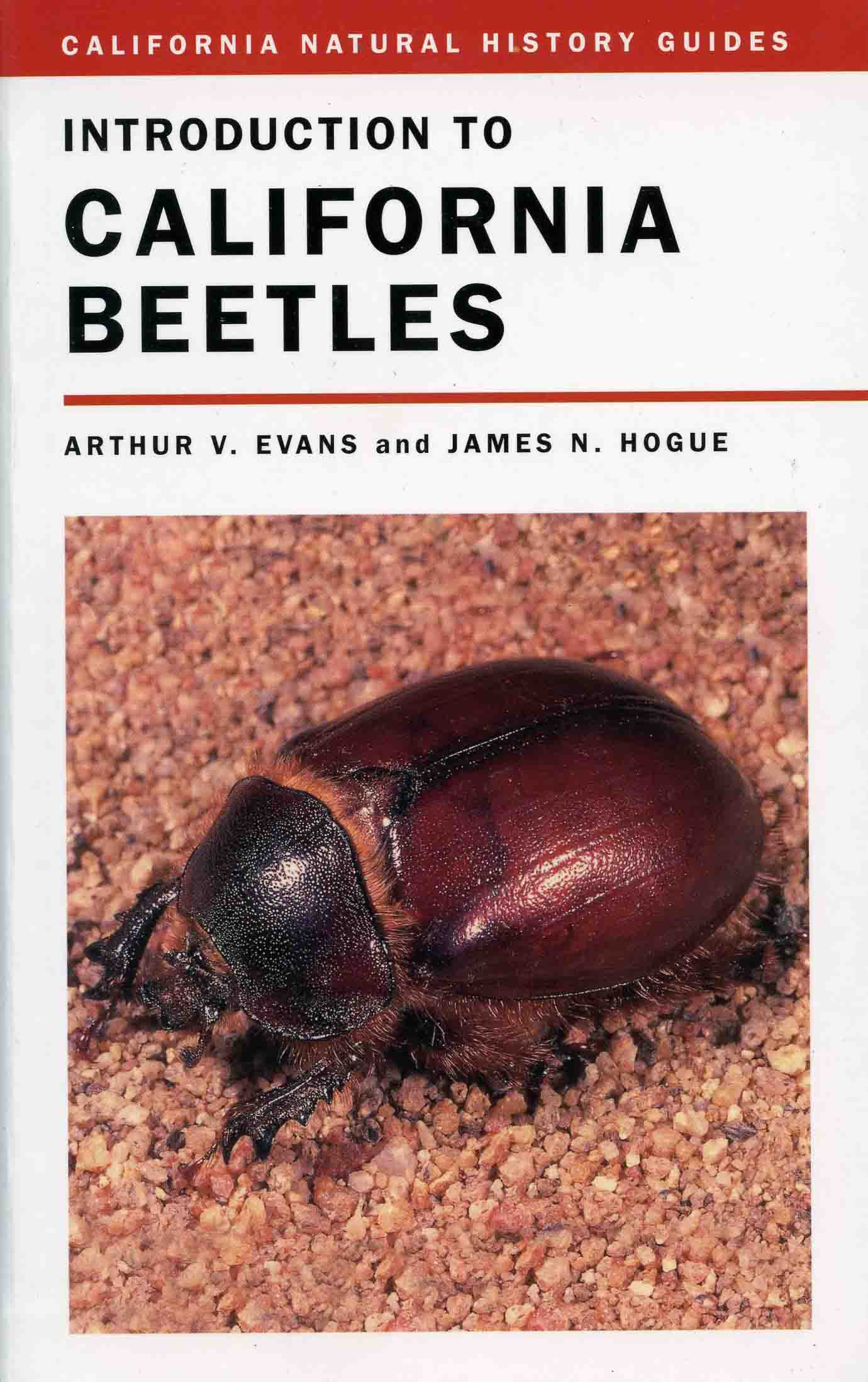 Image for Introduction to California Beetles,
