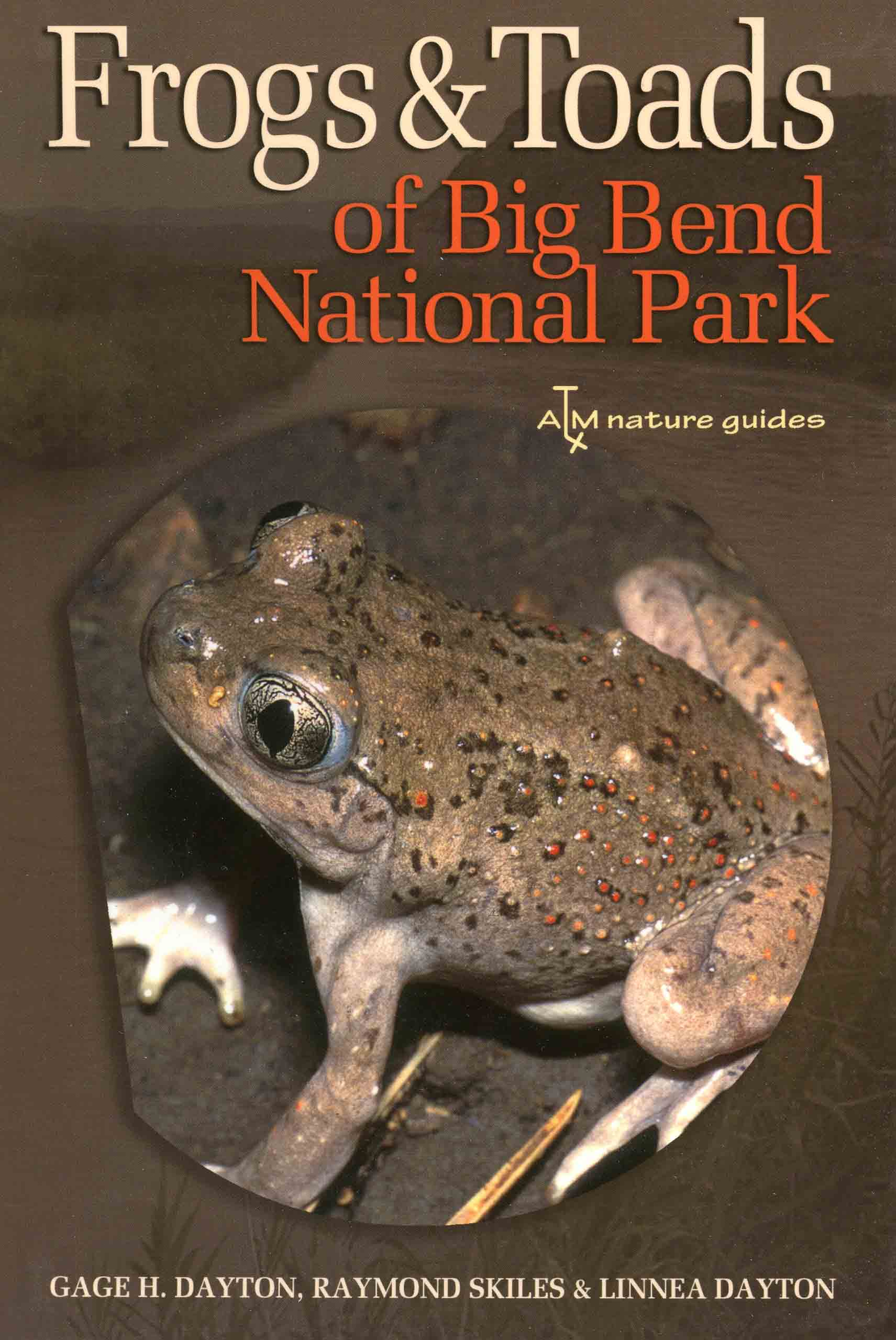 Image for Frogs & Toads of Big Bend National Park,