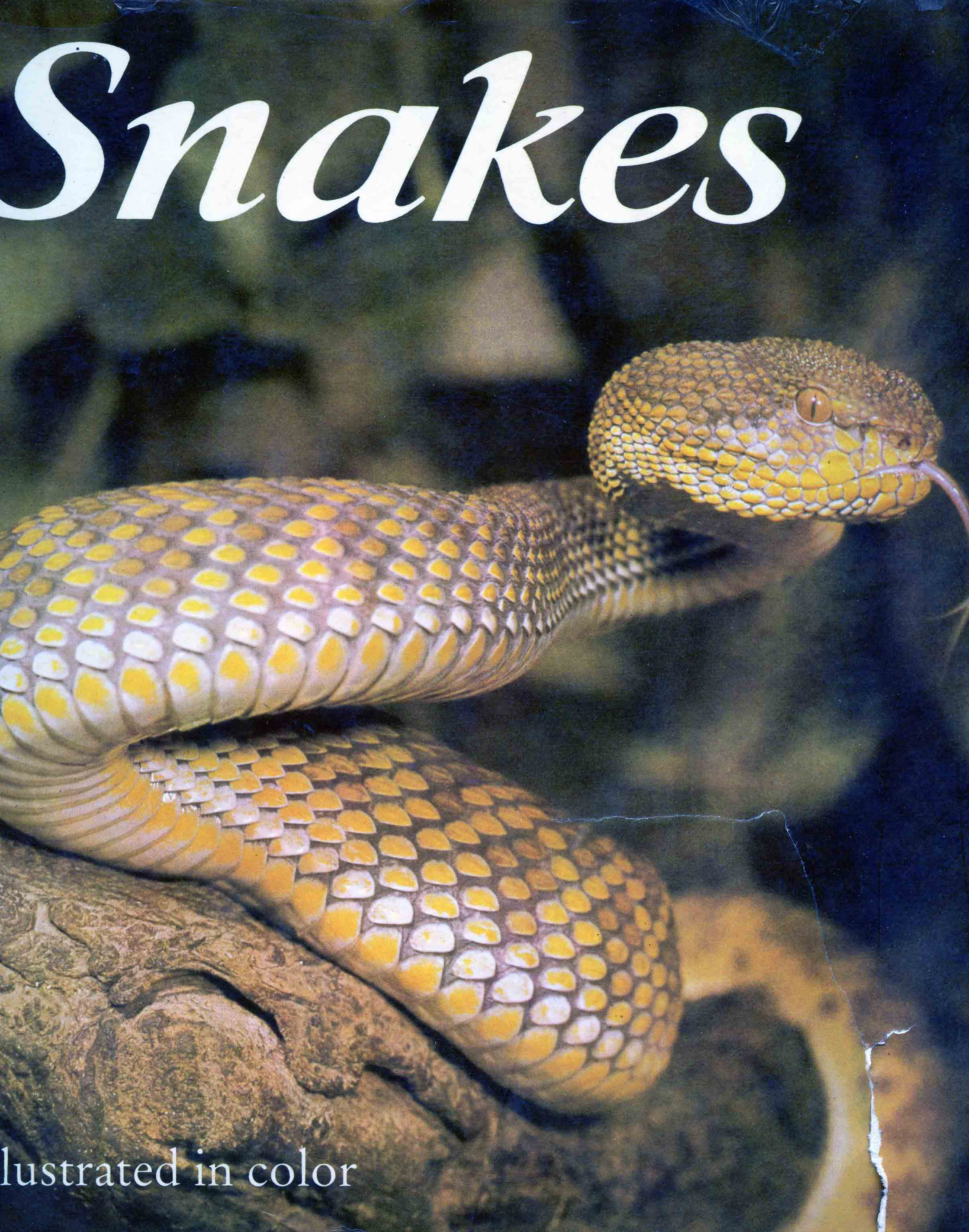 Image for Snakes: Biology, Behavior and Relationship to Man,